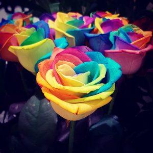 gekleurde rozen als voorbeeld voor kleurenmarketing